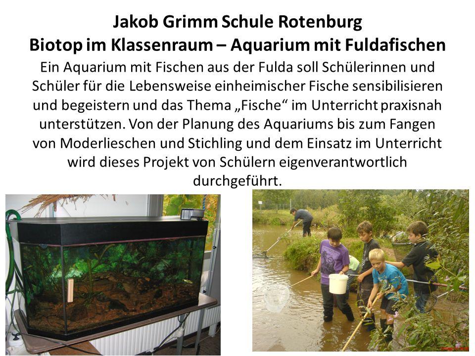 Jakob Grimm Schule Rotenburg Biotop im Klassenraum – Aquarium mit Fuldafischen