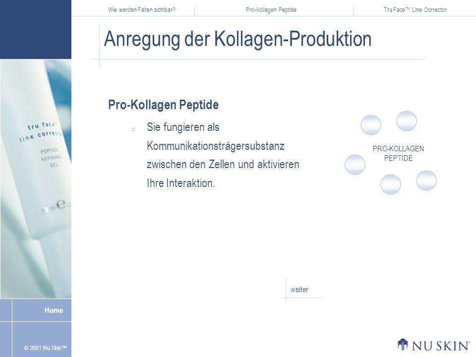 Anregung der Kollagen-Produktion