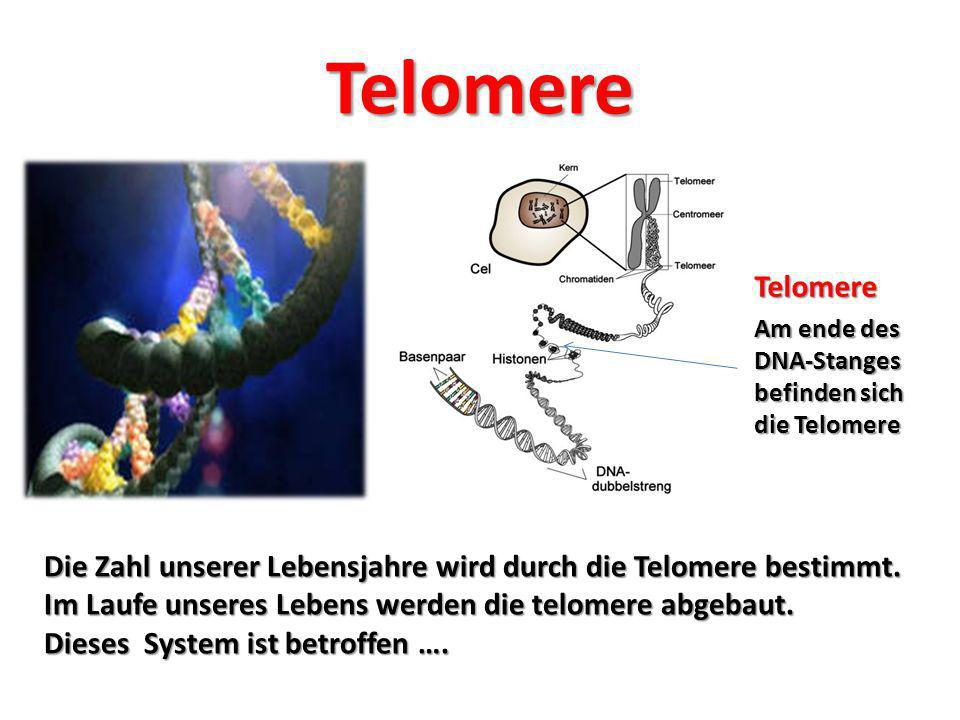 Telomere Telomere. Am ende des DNA-Stanges befinden sich die Telomere.