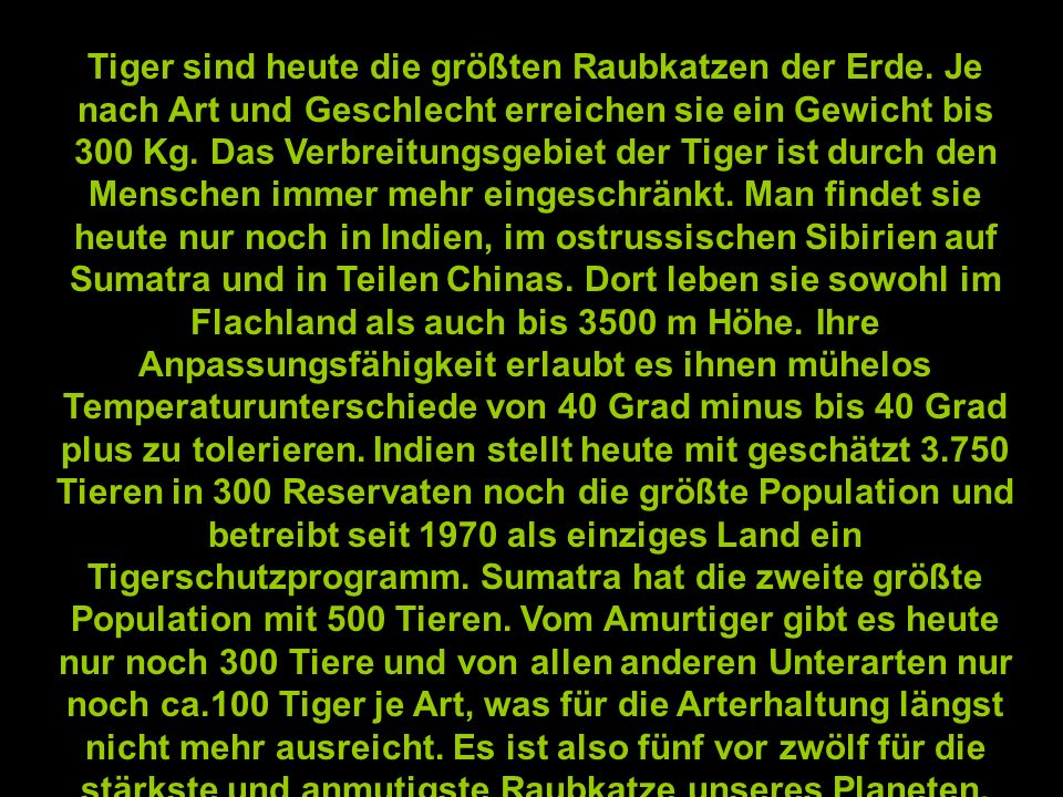 Tiger sind heute die größten Raubkatzen der Erde