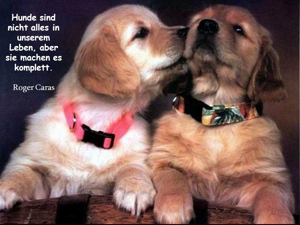 Hunde sind nicht alles in unserem Leben, aber sie machen es komplett.