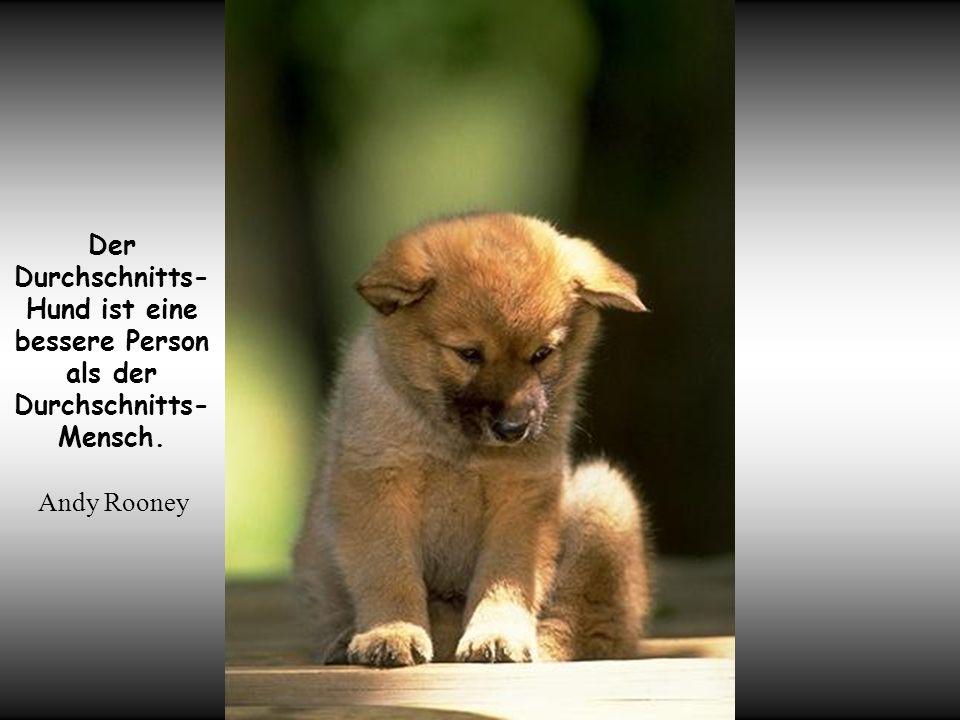 你默默的回首 Der Durchschnitts-Hund ist eine bessere Person als der Durchschnitts-Mensch. Andy Rooney