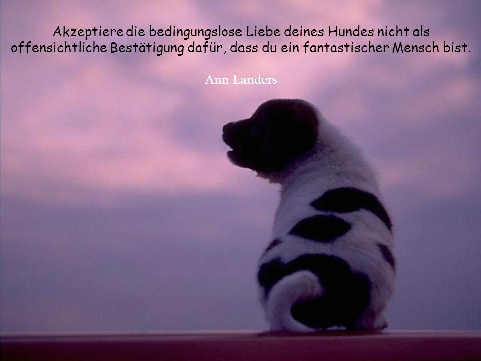 Akzeptiere die bedingungslose Liebe deines Hundes nicht als offensichtliche Bestätigung dafür, dass du ein fantastischer Mensch bist.