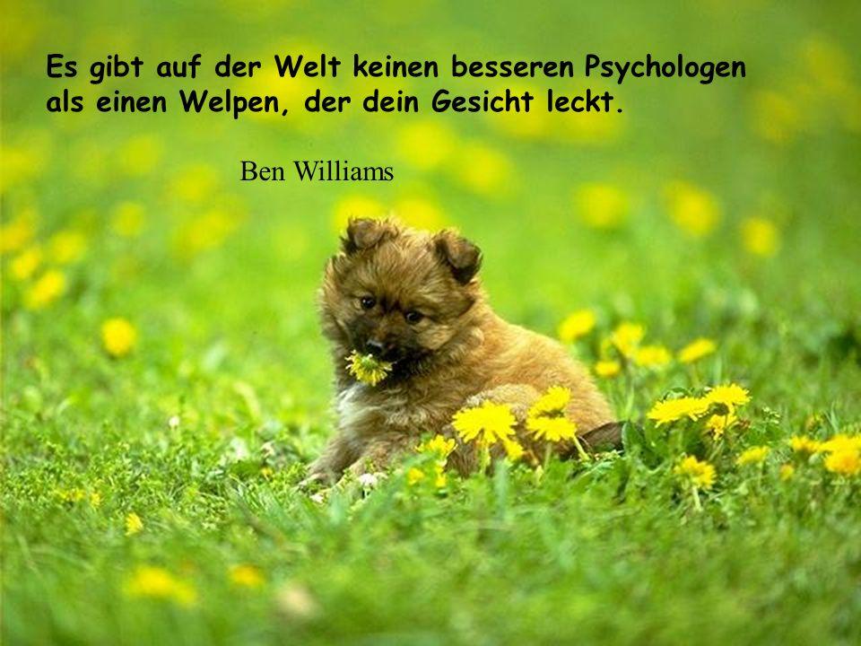 Es gibt auf der Welt keinen besseren Psychologen