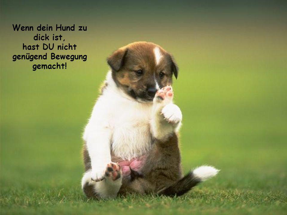 Wenn dein Hund zu dick ist, hast DU nicht genügend Bewegung