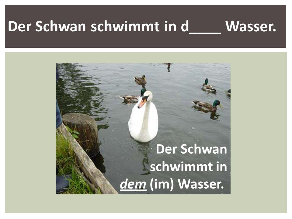 Der Schwan schwimmt in d____ Wasser.