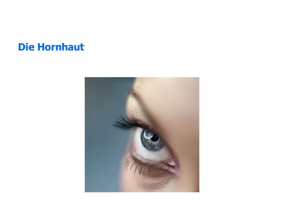 Die Hornhaut