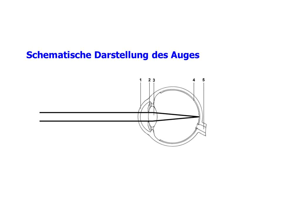 Schematische Darstellung des Auges