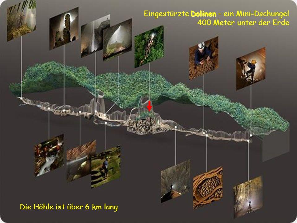 Eingestürzte Dolinen – ein Mini-Dschungel 400 Meter unter der Erde