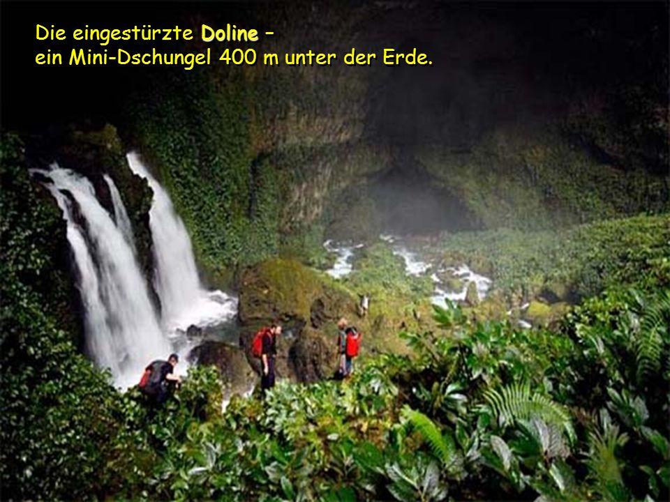 Die eingestürzte Doline – ein Mini-Dschungel 400 m unter der Erde.
