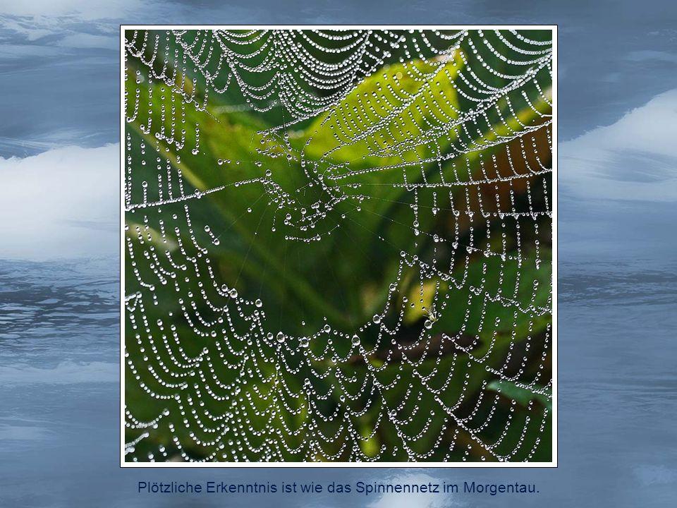 Plötzliche Erkenntnis ist wie das Spinnennetz im Morgentau.