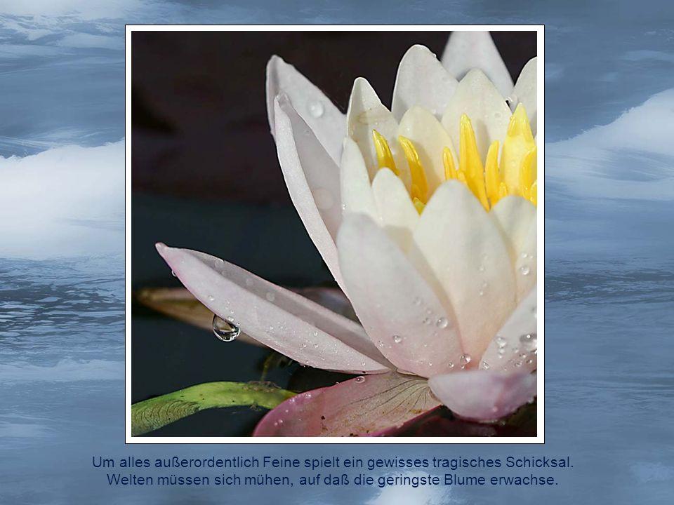 Welten müssen sich mühen, auf daß die geringste Blume erwachse.