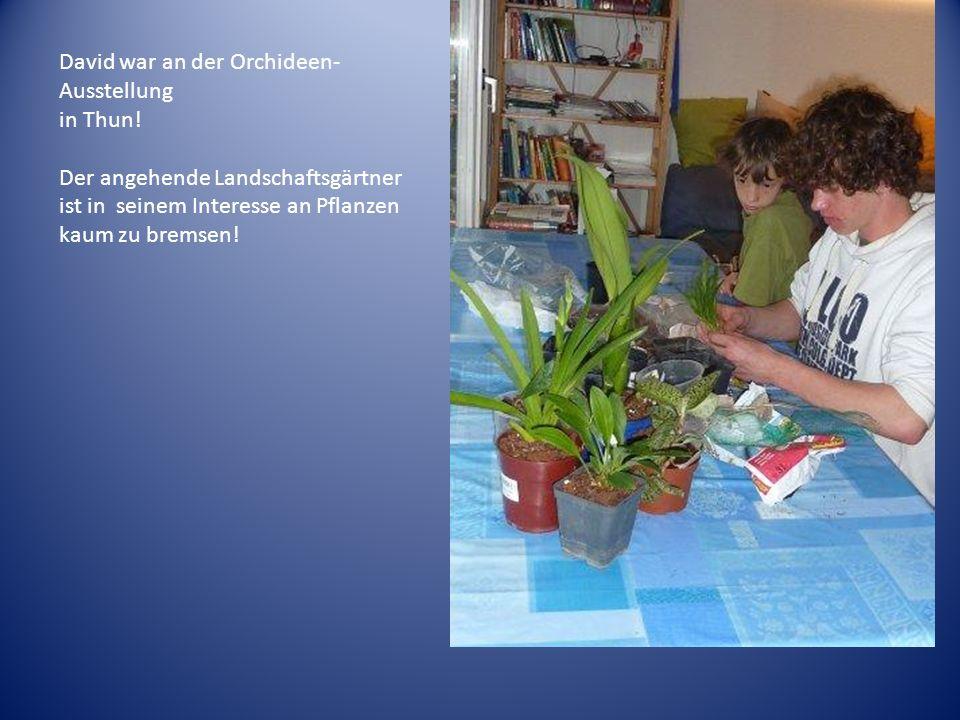 David war an der Orchideen-Ausstellung