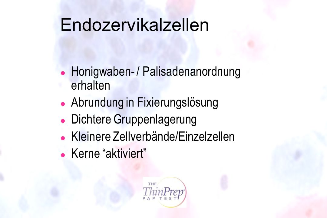 Endozervikalzellen Honigwaben- / Palisadenanordnung erhalten