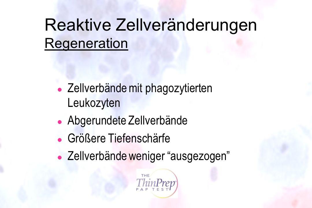 Reaktive Zellveränderungen Regeneration