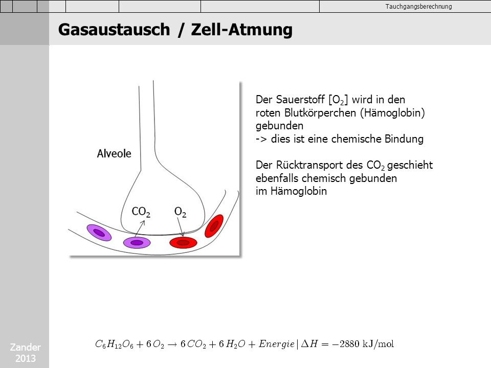 Gasaustausch / Zell-Atmung