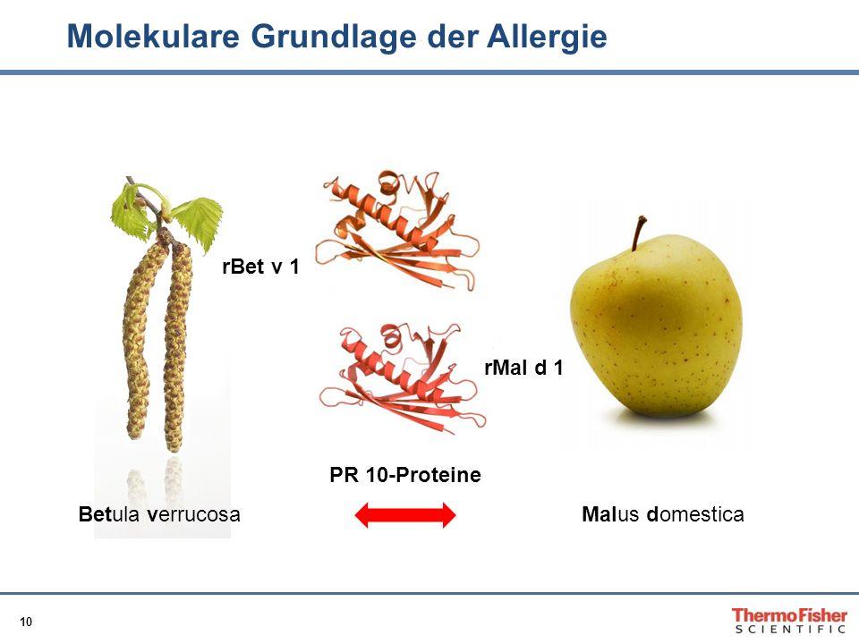 Molekulare Grundlage der Allergie