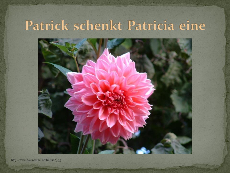 Patrick schenkt Patricia eine