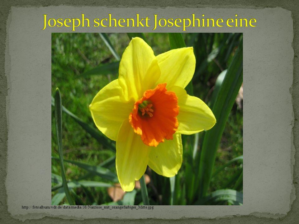 Joseph schenkt Josephine eine