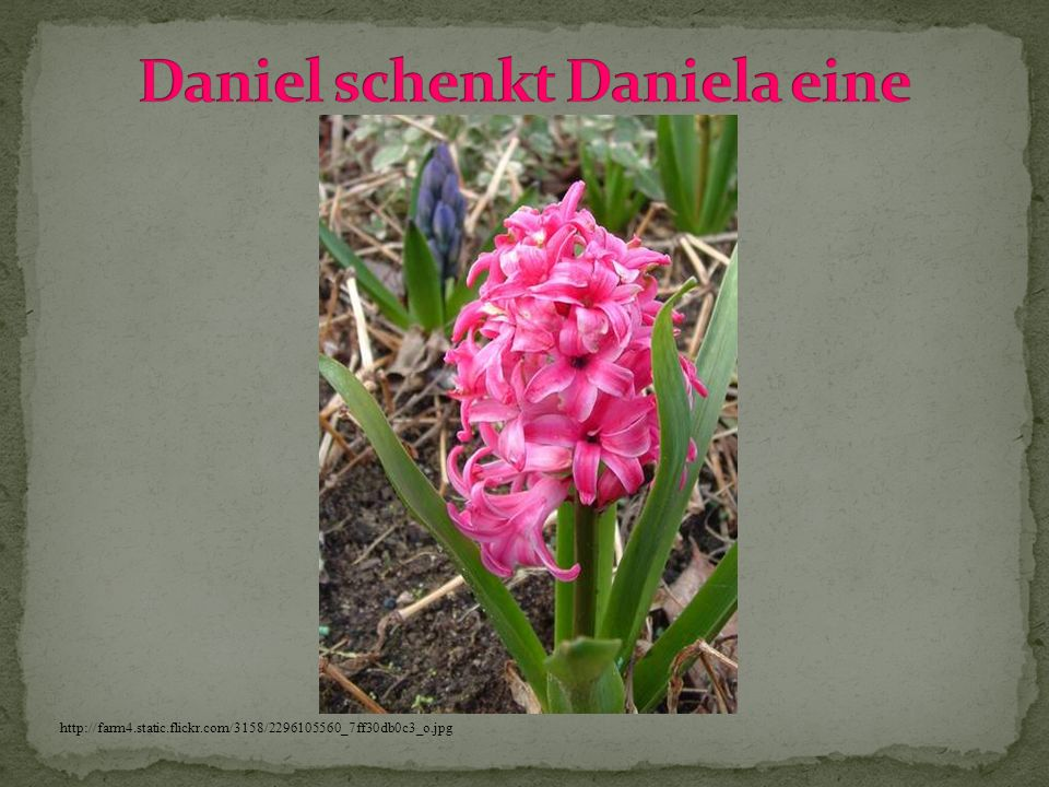 Daniel schenkt Daniela eine