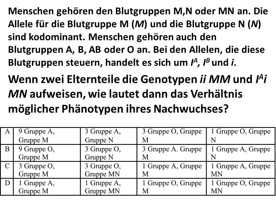 Menschen gehören den Blutgruppen M,N oder MN an