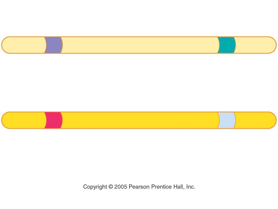Figure: 12-UN9 Title: Heterozygous pea plant chromosomes
