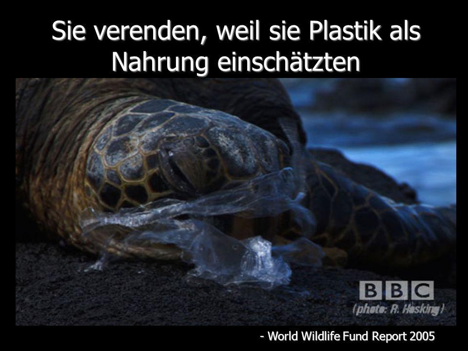 Sie verenden, weil sie Plastik als Nahrung einschätzten