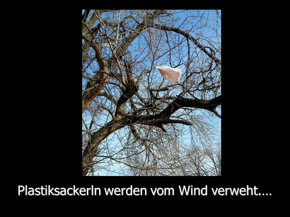 Plastiksackerln werden vom Wind verweht.…