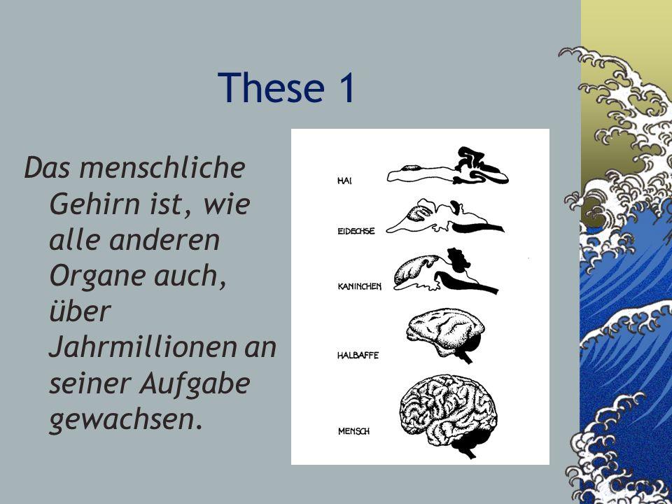 These 1 Das menschliche Gehirn ist, wie alle anderen Organe auch, über Jahrmillionen an seiner Aufgabe gewachsen.