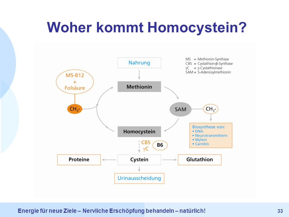 Woher kommt Homocystein