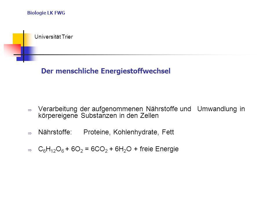 Der menschliche Energiestoffwechsel