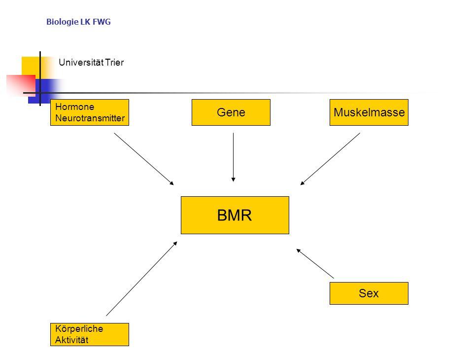 BMR Gene Muskelmasse Sex Hormone Neurotransmitter Körperliche