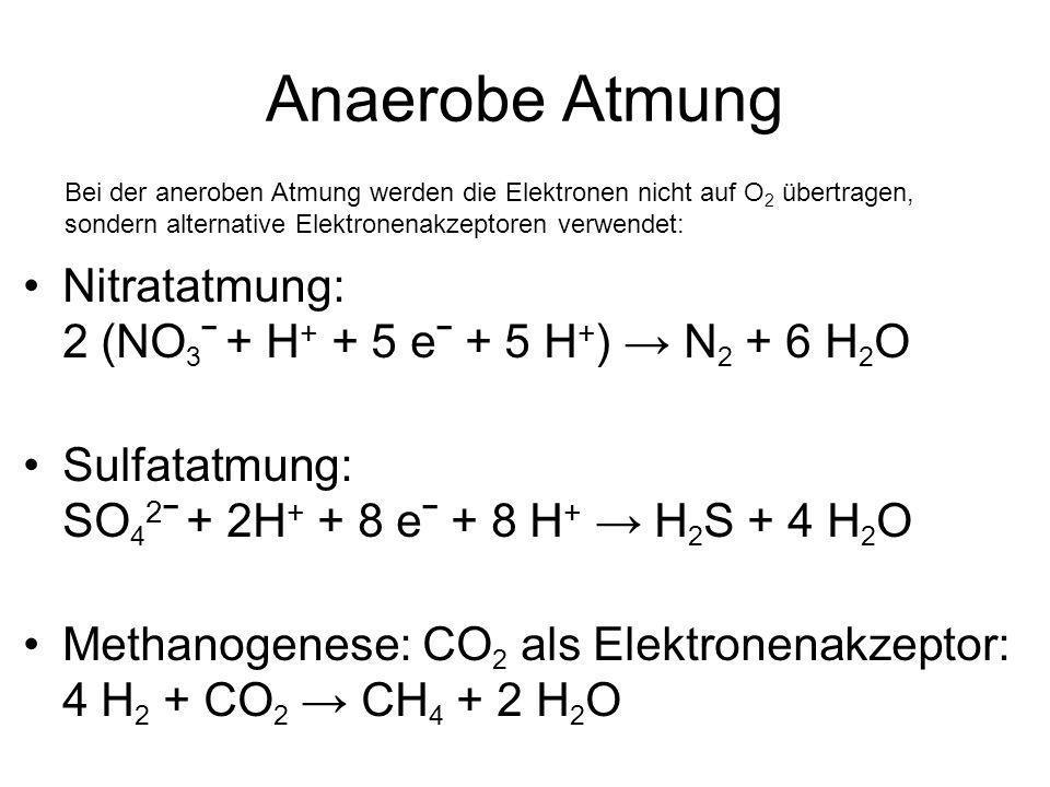 Anaerobe Atmung Nitratatmung: 2 (NO3ˉ + H+ + 5 eˉ + 5 H+) → N2 + 6 H2O