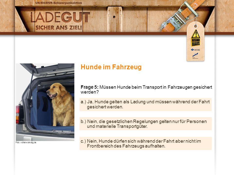 Hunde im Fahrzeug Frage 5: Müssen Hunde beim Transport in Fahrzeugen gesichert werden