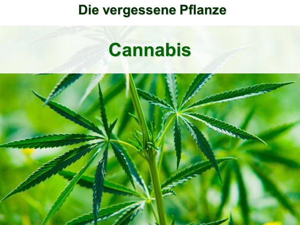 Die vergessene Pflanze