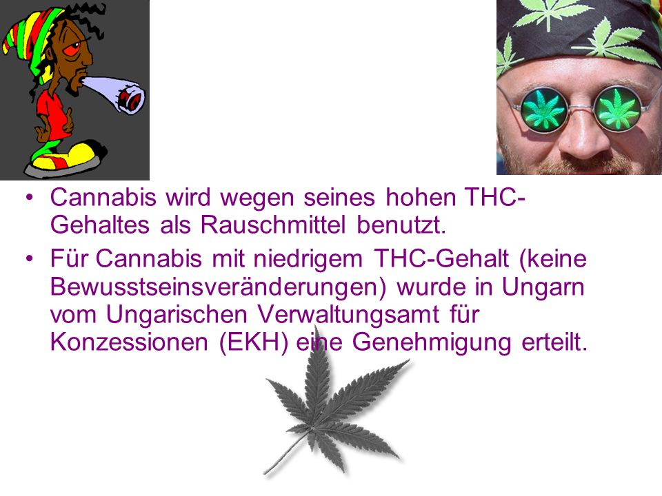 Cannabis wird wegen seines hohen THC-Gehaltes als Rauschmittel benutzt.