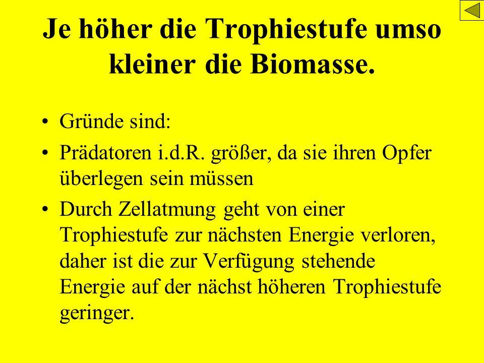 Je höher die Trophiestufe umso kleiner die Biomasse.