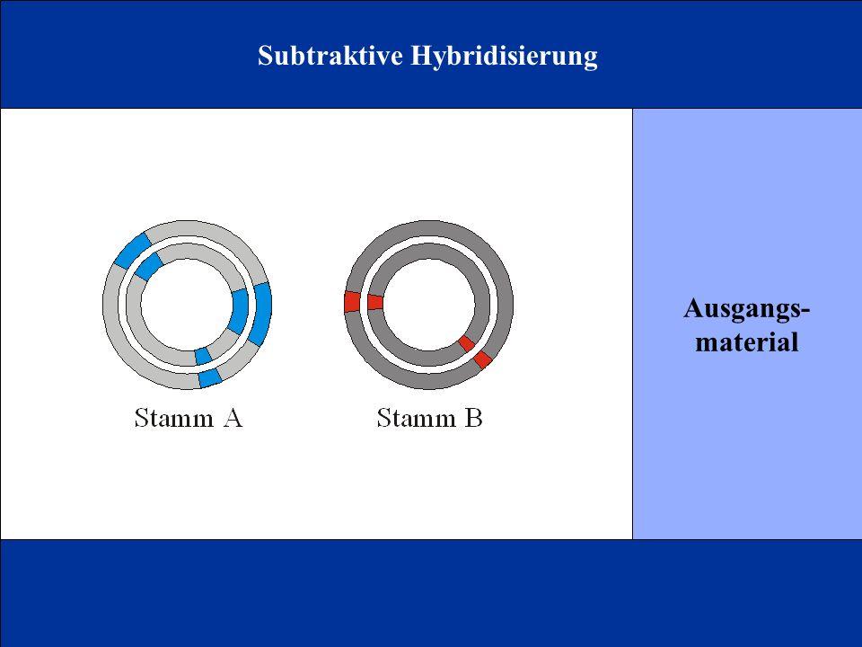 Subtraktive Hybridisierung