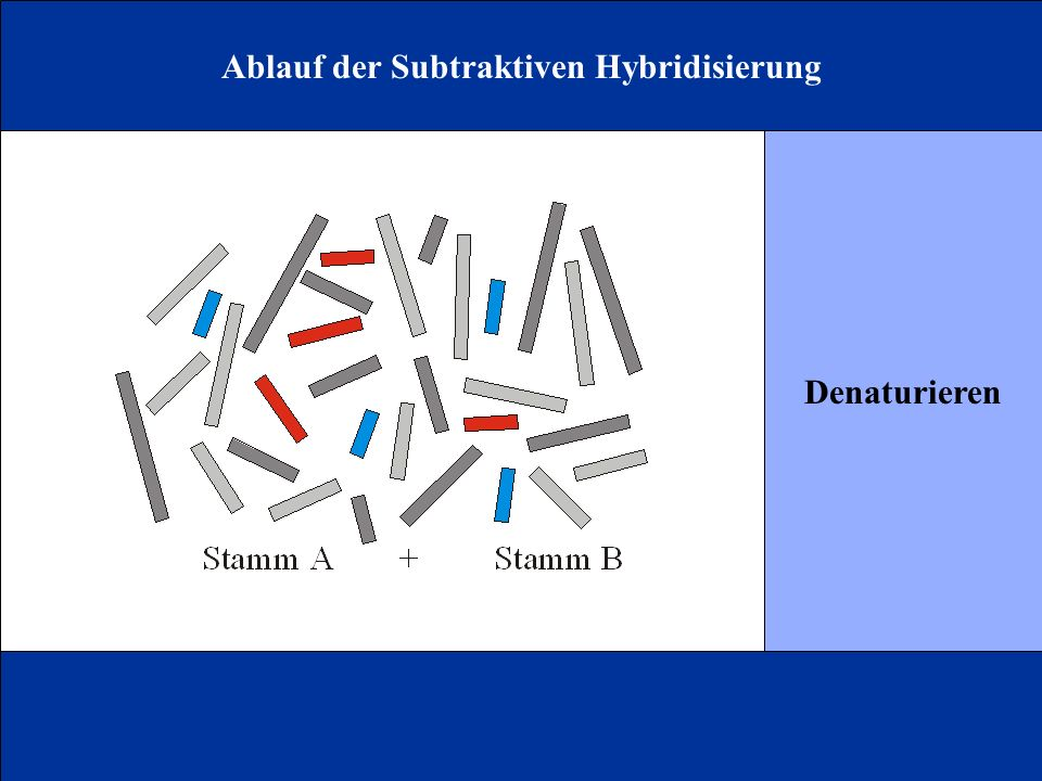 Ablauf der Subtraktiven Hybridisierung
