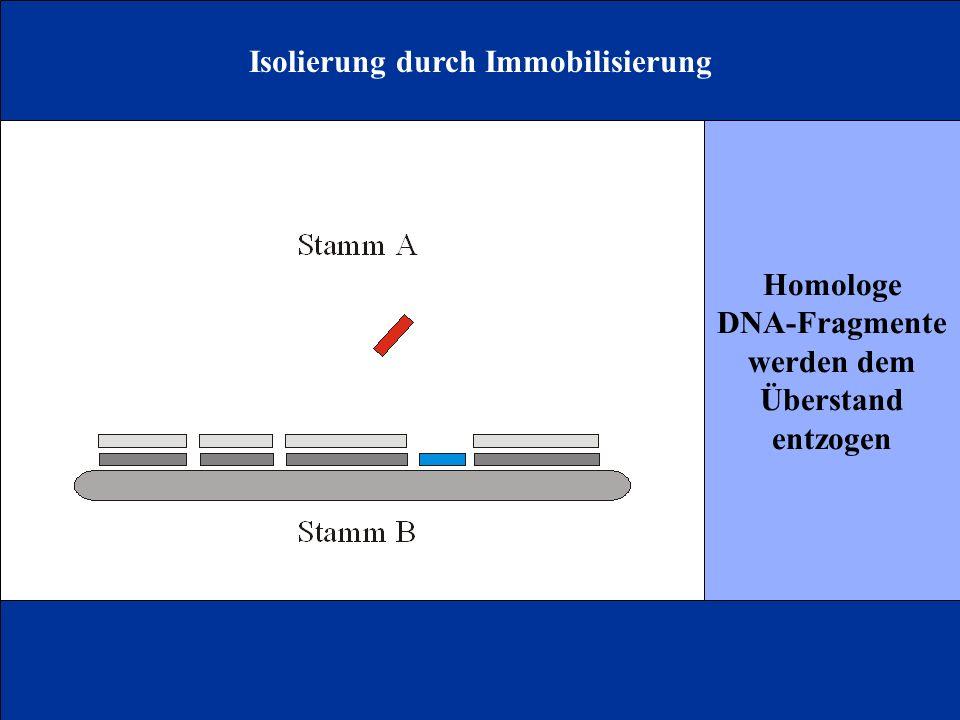 Isolierung durch Immobilisierung
