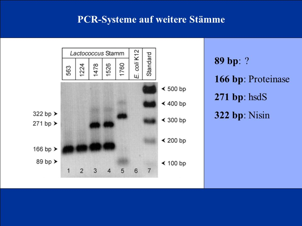 PCR-Systeme auf weitere Stämme