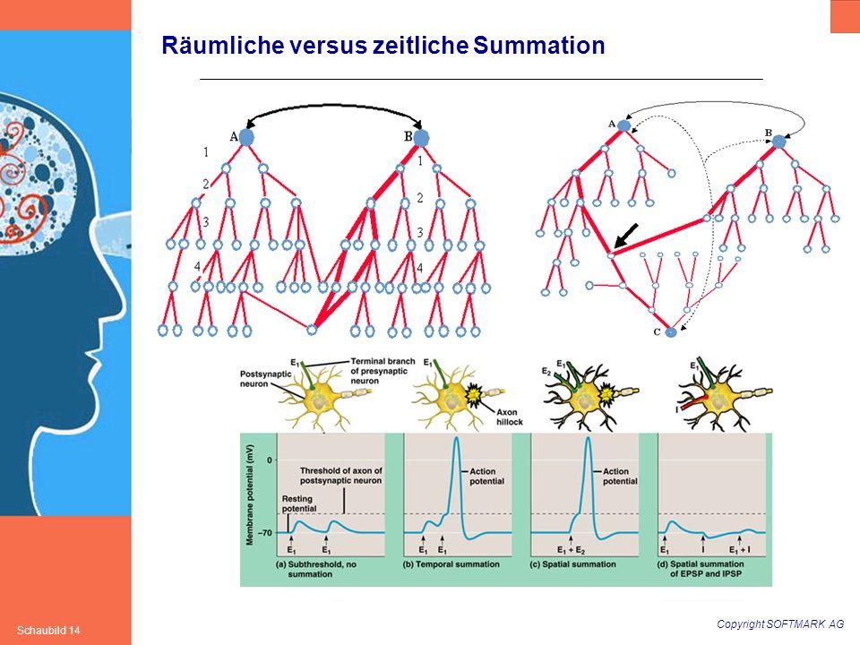 Räumliche versus zeitliche Summation