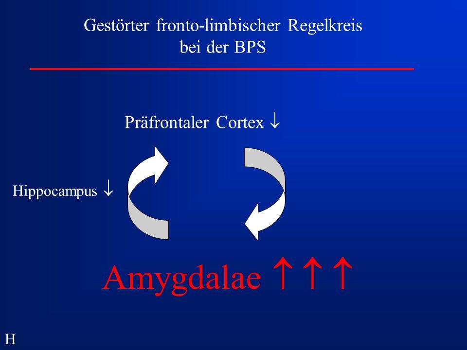 Gestörter fronto-limbischer Regelkreis bei der BPS