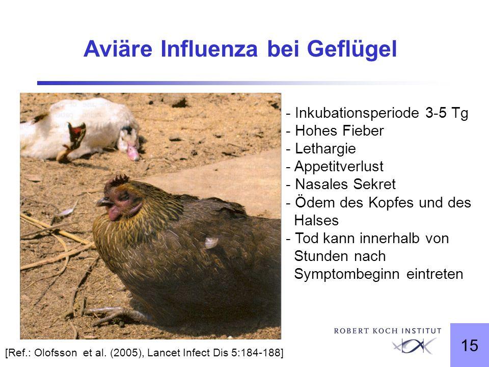 Aviäre Influenza bei Geflügel