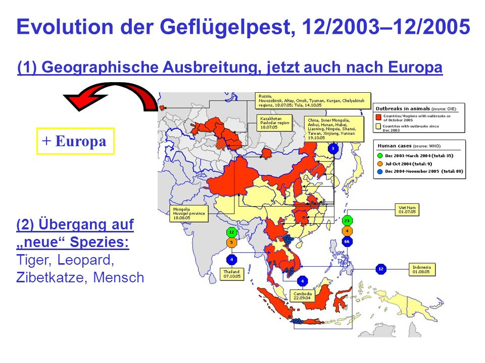 Evolution der Geflügelpest, 12/2003–12/2005
