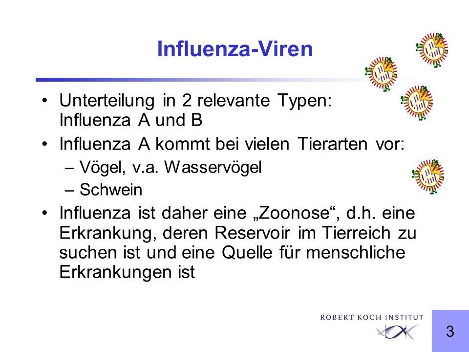 Influenza-Viren Unterteilung in 2 relevante Typen: Influenza A und B