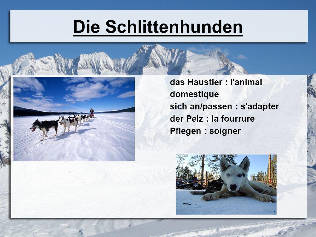 Die Schlittenhunden das Haustier : l animal domestique