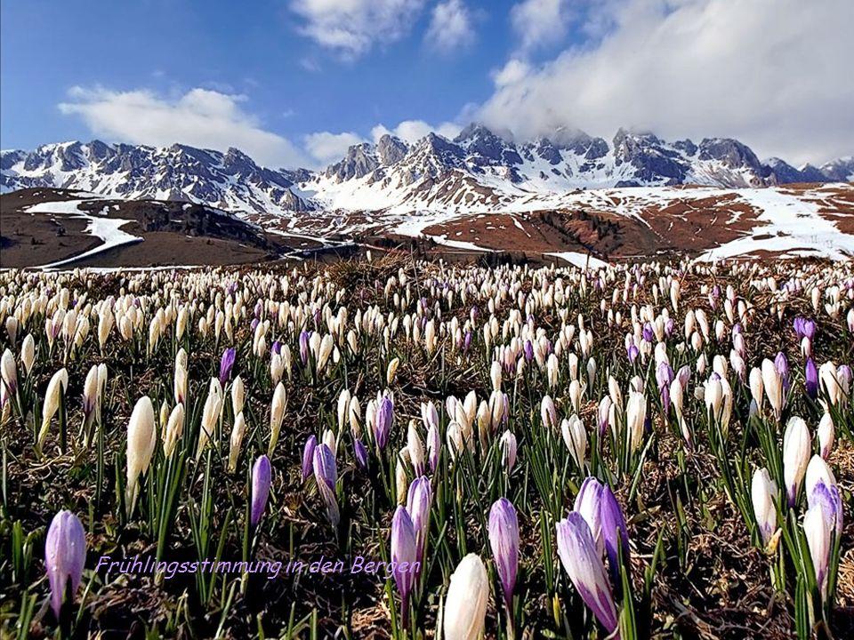 Frühlingsstimmung in den Bergen