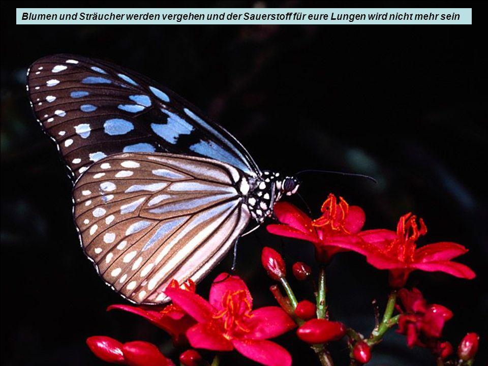 Blumen und Sträucher werden vergehen und der Sauerstoff für eure Lungen wird nicht mehr sein