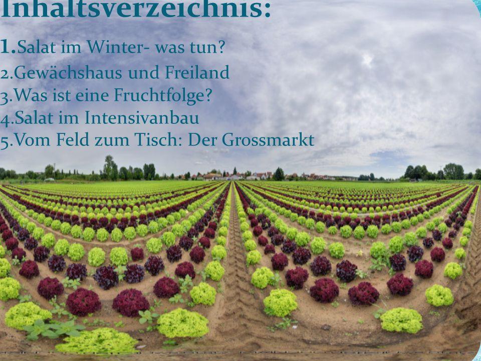 Inhaltsverzeichnis: 1. Salat im Winter- was tun. 2